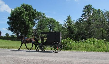 picture of a black Amish style horse and buggy on a beautiful day with a bright blue sky.