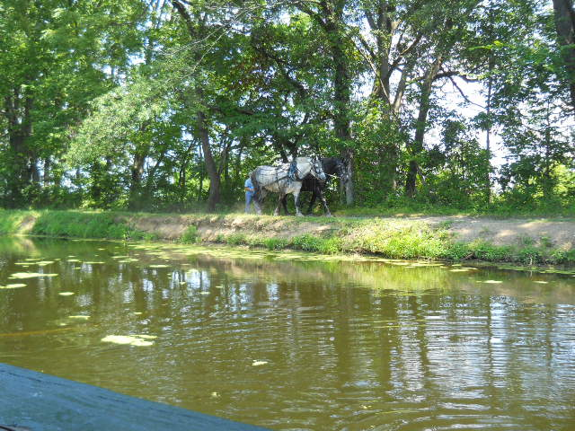 horses on the ohio canal