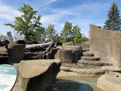 rocks with a black bear on it from the cleveland metro zoo, Photo taken by Nancy K Gurish, Your Health And Tech Friend Magazine