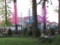 pretty pink trees glow in front of house
